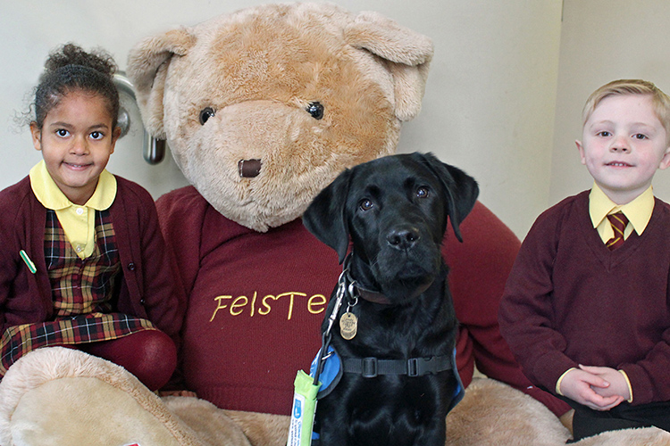 Felsted meets Fels-Teddy the Guide Dog Puppy